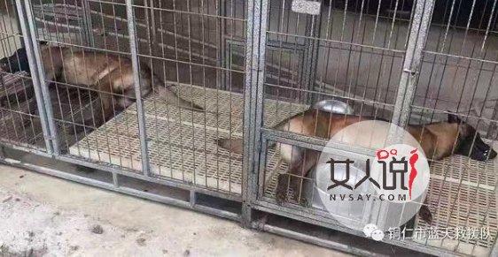 两搜救犬疑被毒死 被毒死具体情况是什么